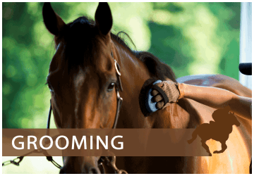 JS Equine - supplier of a full range of equestrian products